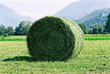 L'agriculture dans la campagne présidentielle